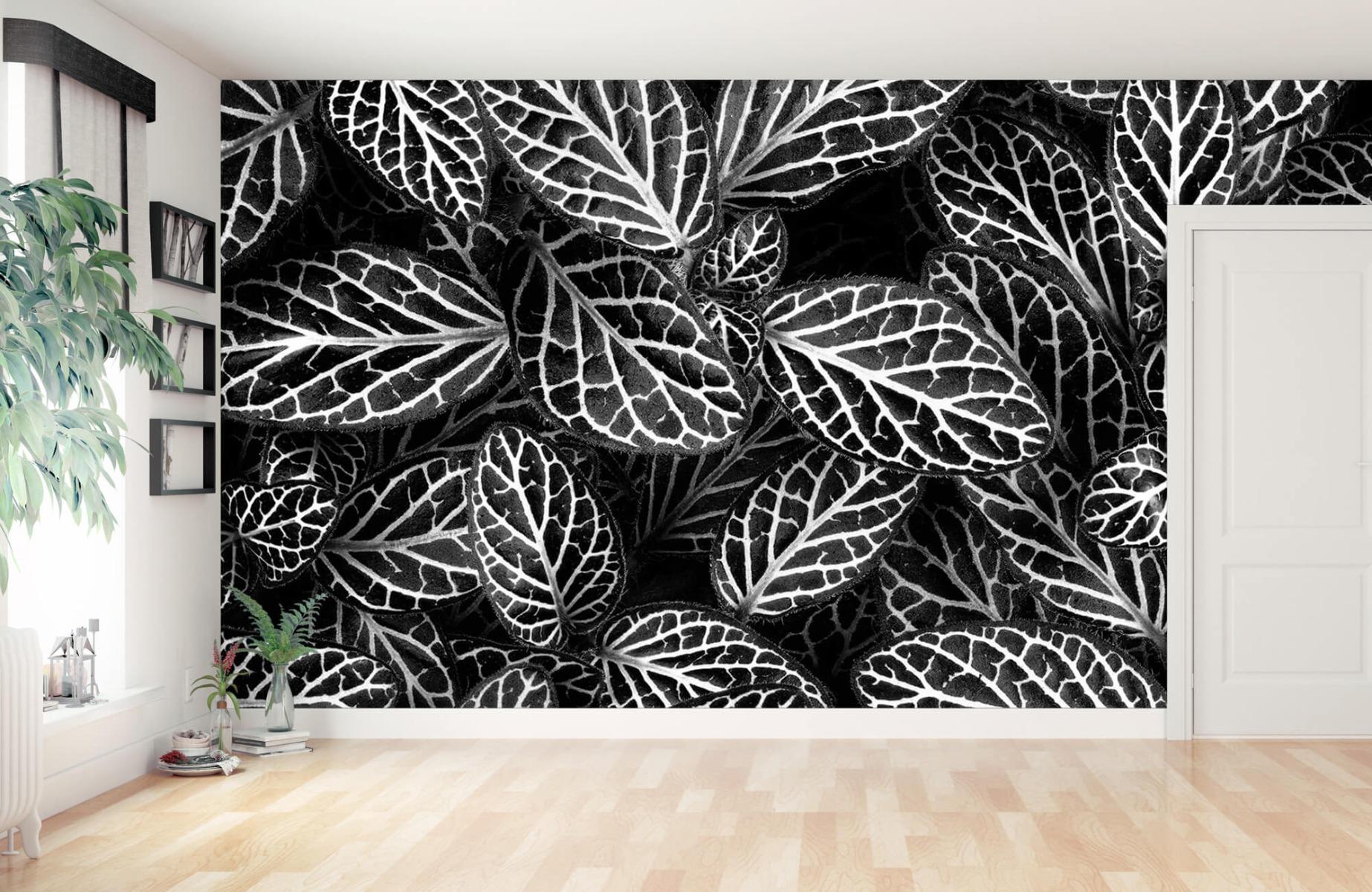 Zwart Wit behang - Fittonia - Wallexclusive - Vergaderruimte 10