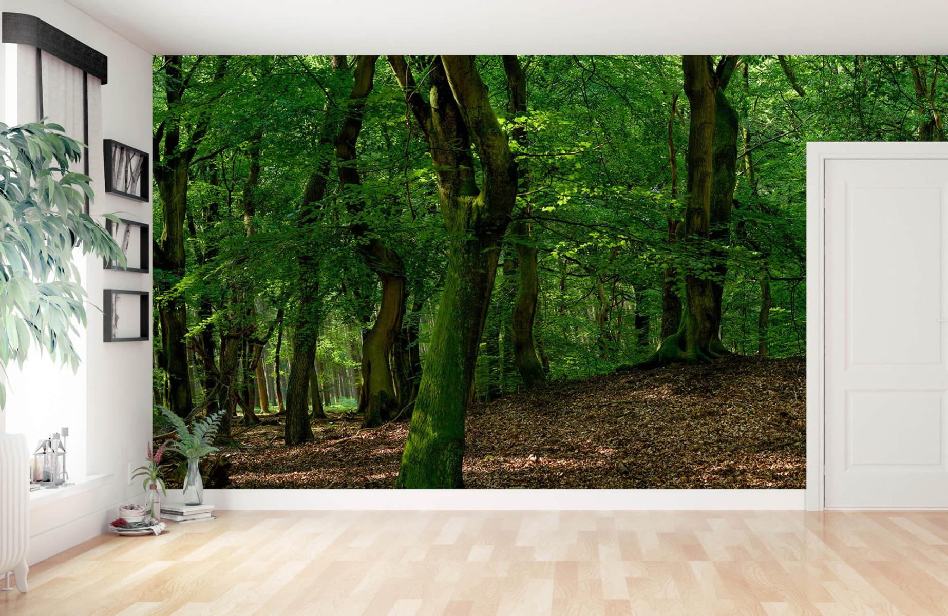 Bos behang - Bomen met groene bladeren - Wallexclusive - Slaapkamer 15