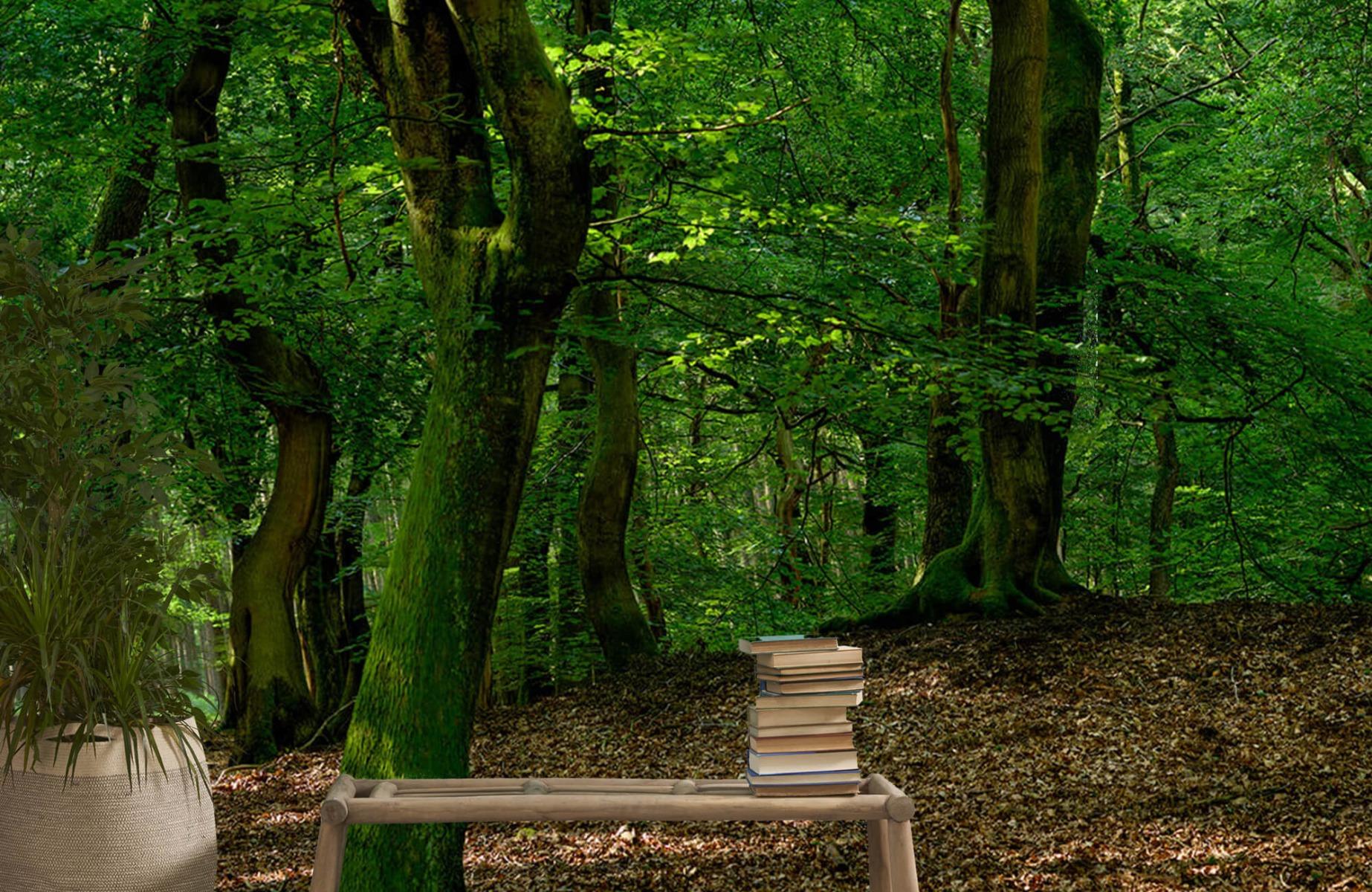Bos behang - Bomen met groene bladeren - Wallexclusive - Slaapkamer 22