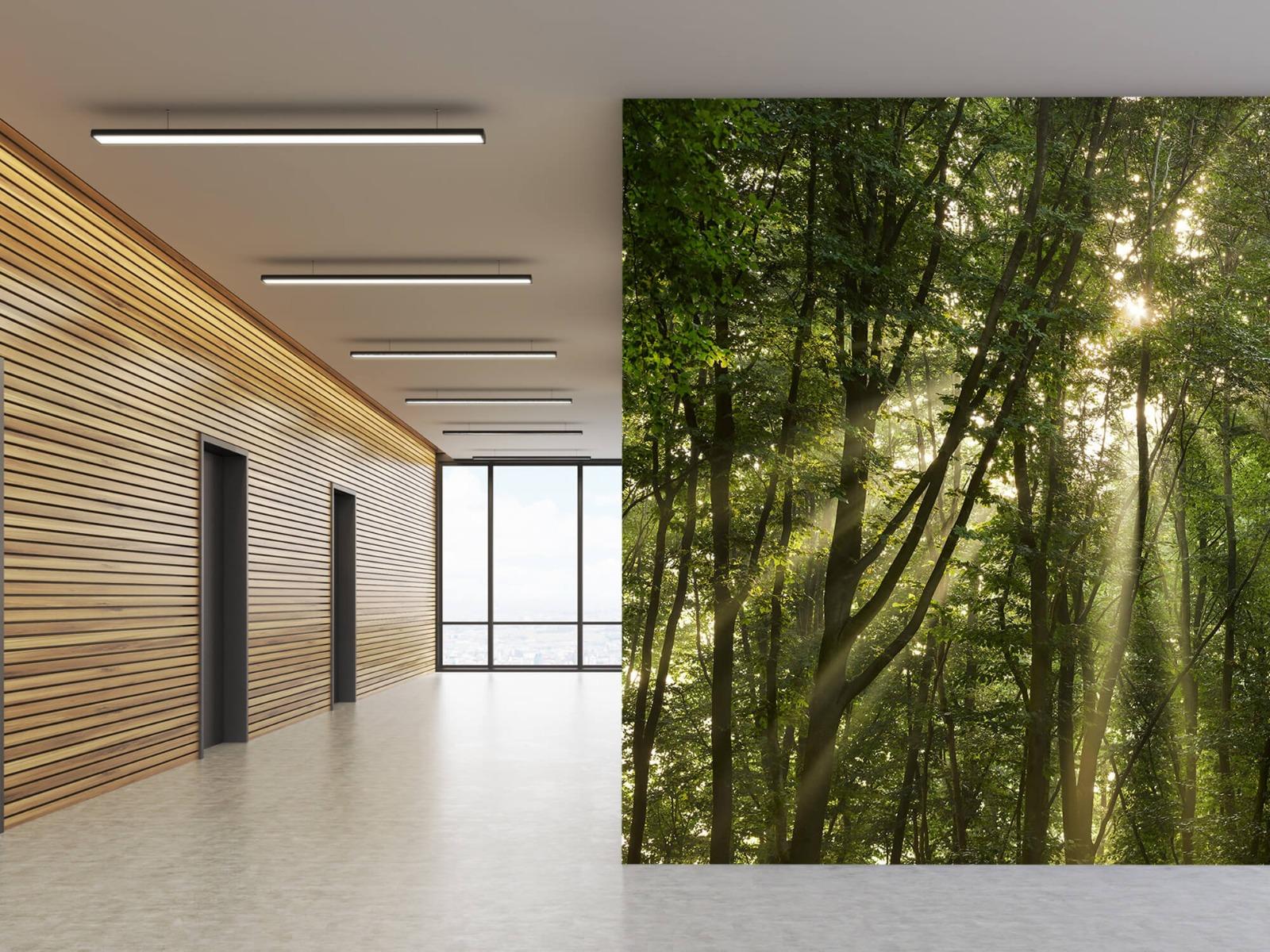 Bomen - Zonnestralen in het bos - Slaapkamer 5