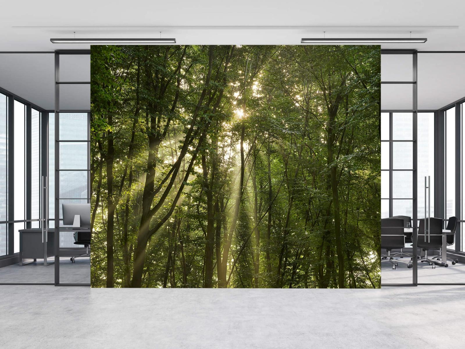 Bomen - Zonnestralen in het bos - Slaapkamer 8