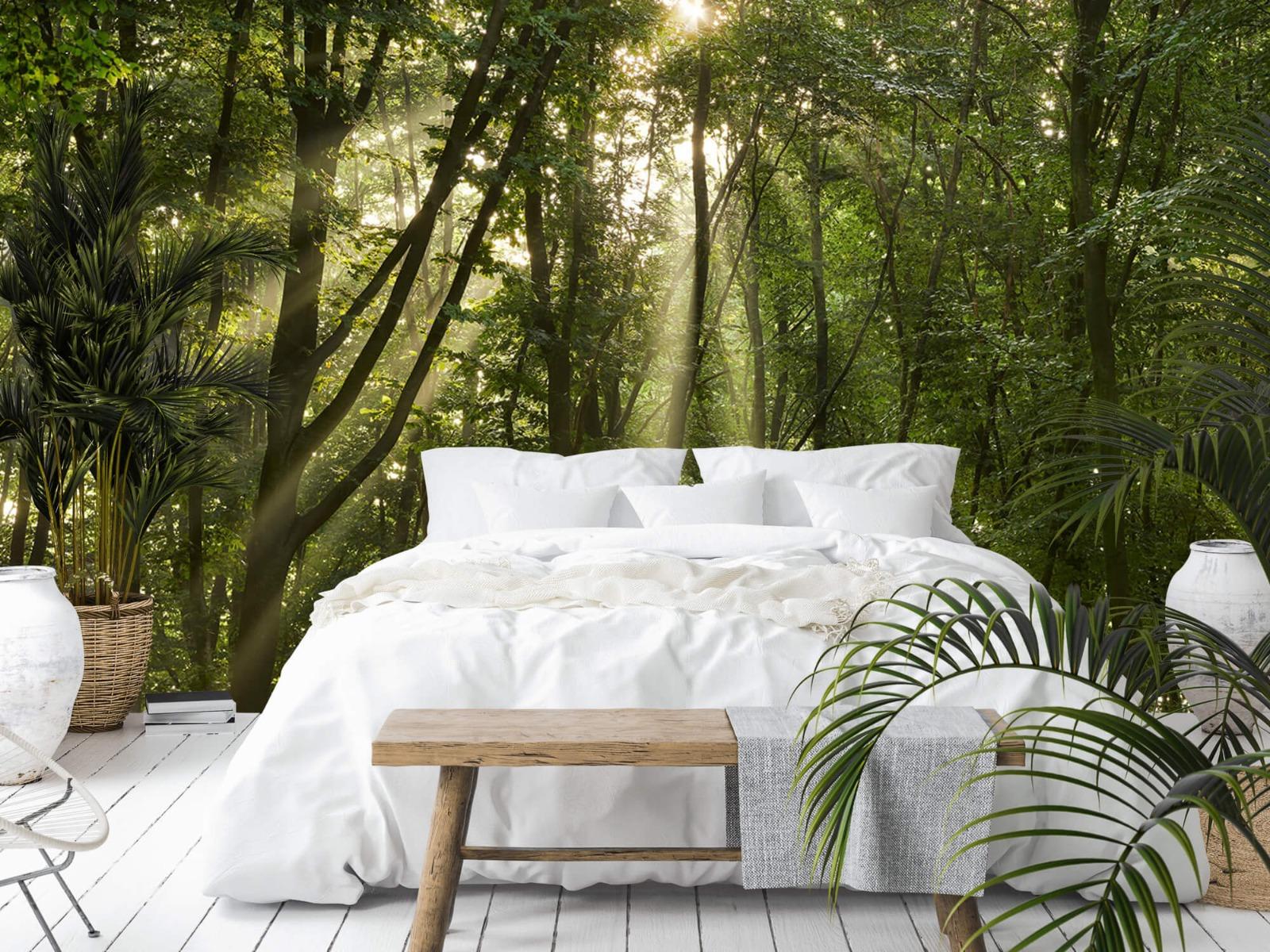 Bomen - Zonnestralen in het bos - Slaapkamer 13