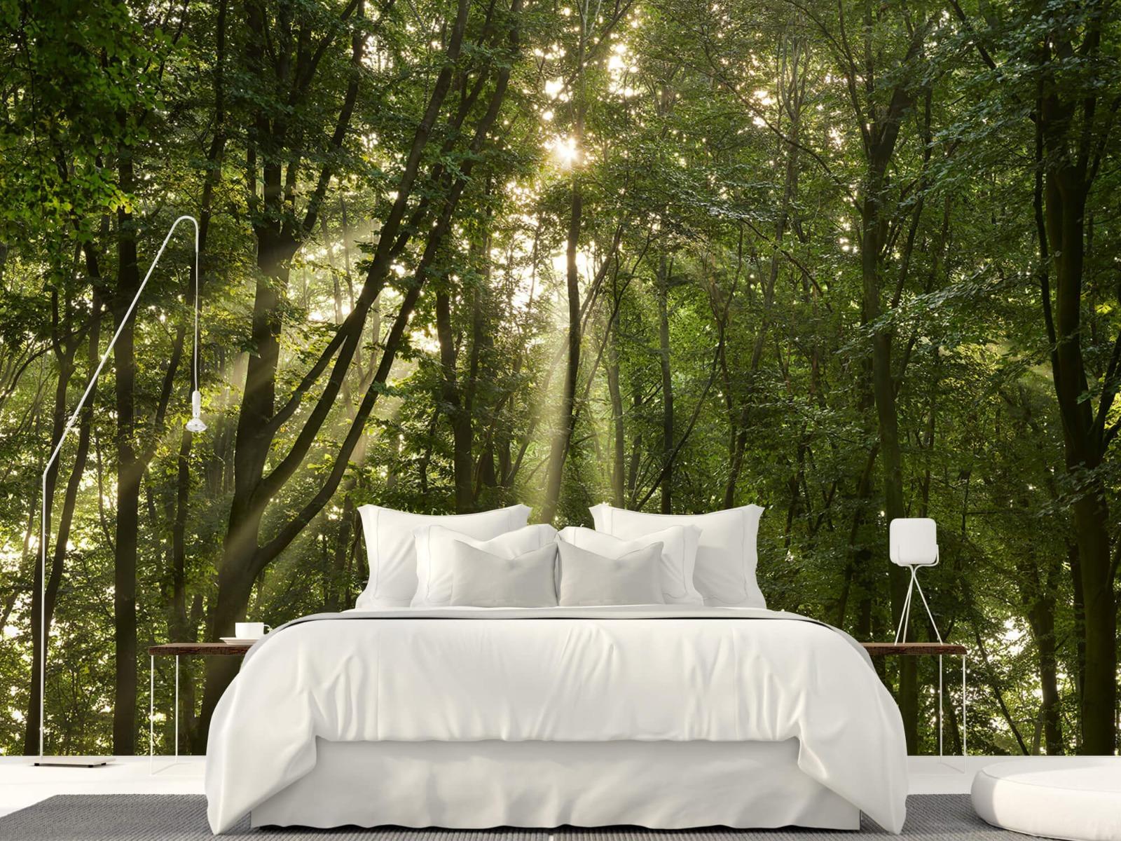 Bomen - Zonnestralen in het bos - Slaapkamer 16