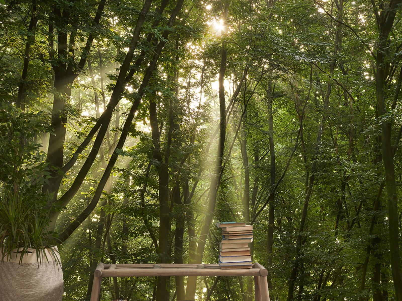 Bomen - Zonnestralen in het bos - Slaapkamer 20