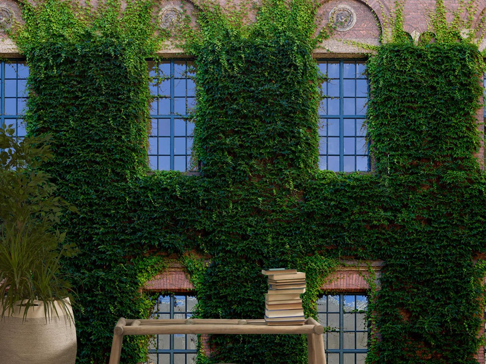 Gebouwen - Klimop op een muur - Woonkamer 20
