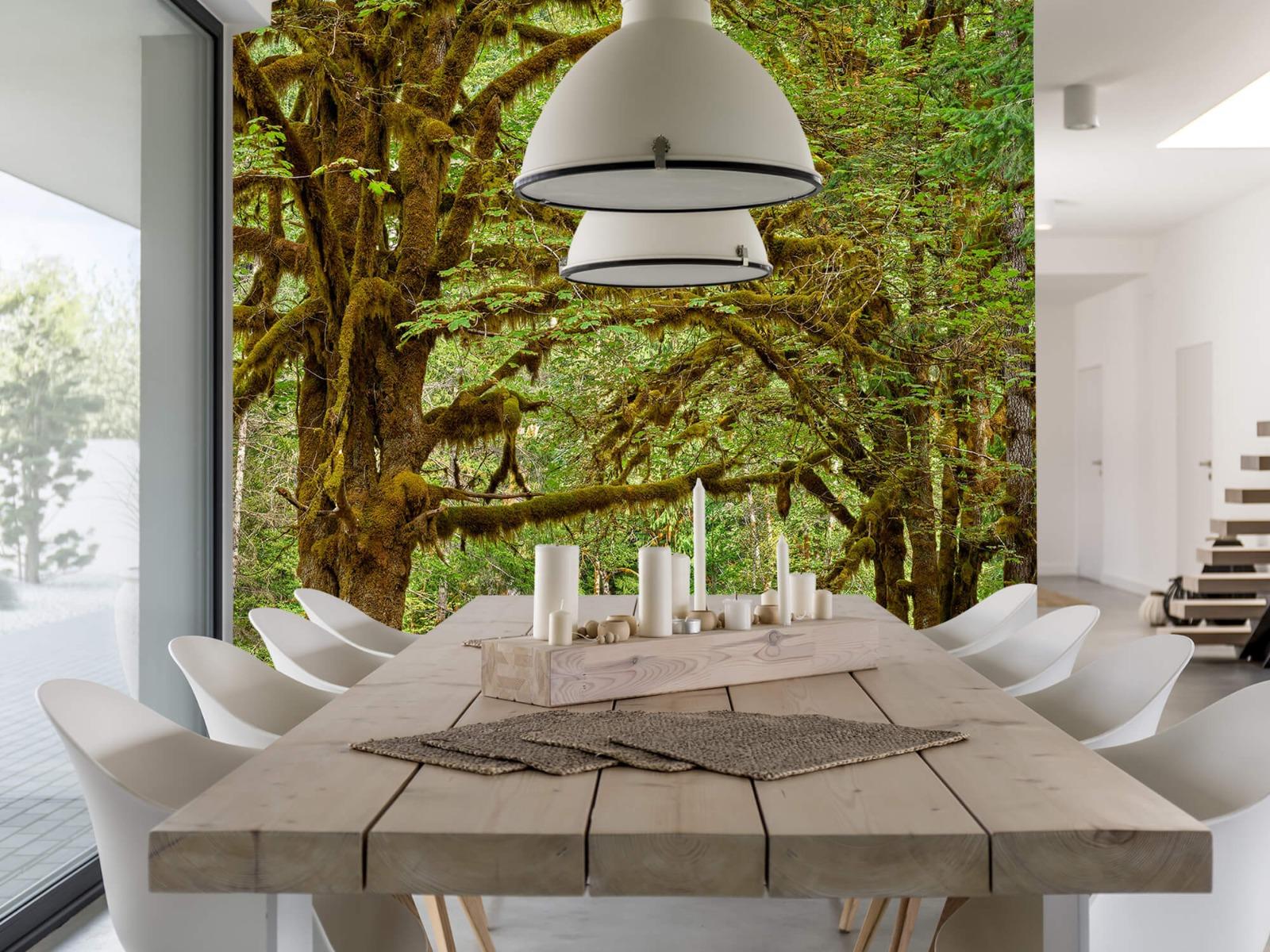 Bos behang - Twee oude bomen - Wallexclusive - Slaapkamer 4