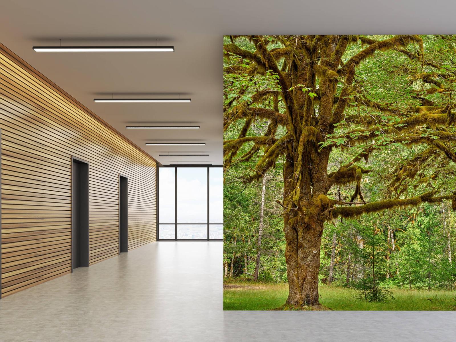 Bos behang - Twee oude bomen - Wallexclusive - Slaapkamer 8