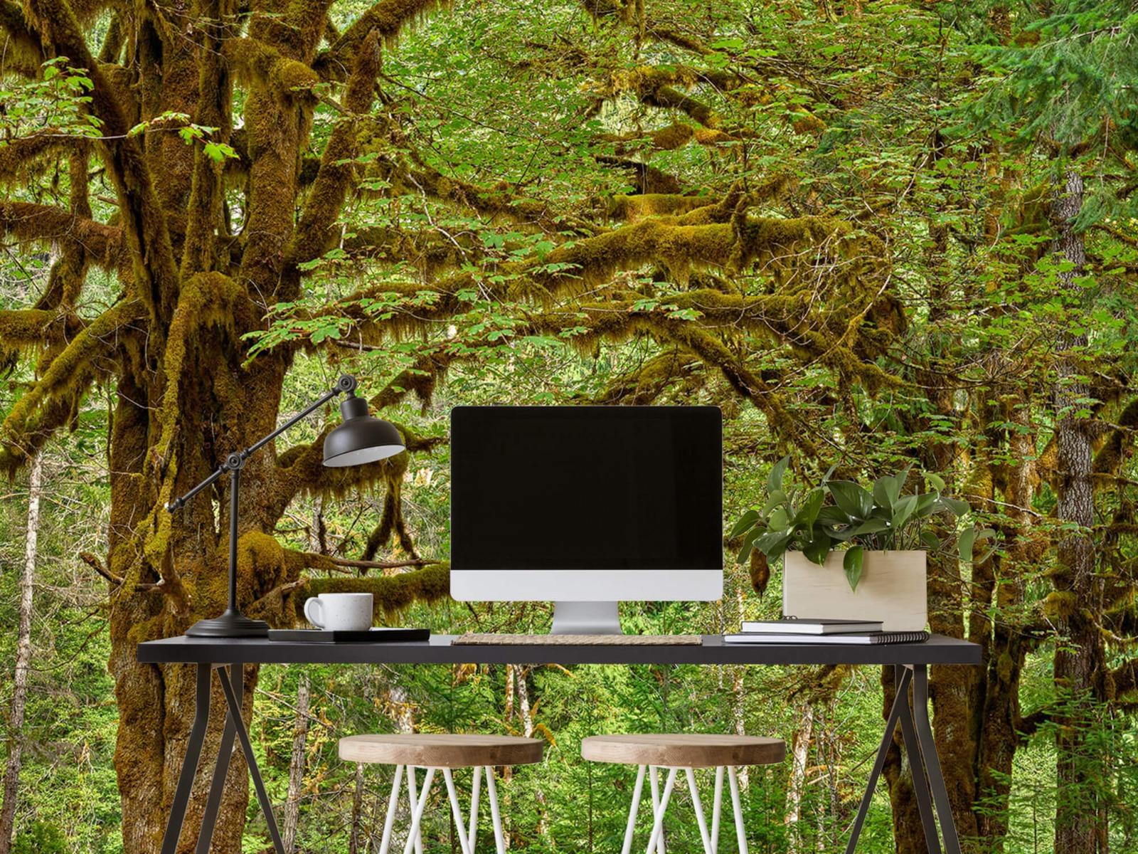 Bos behang - Twee oude bomen - Wallexclusive - Slaapkamer 9