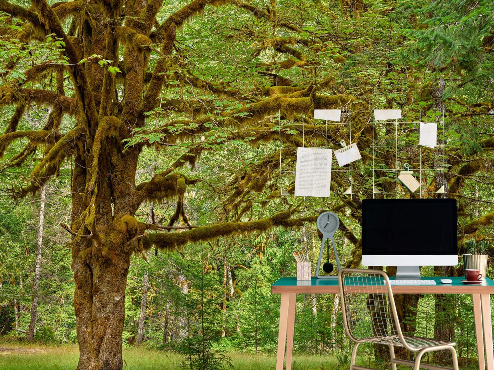 Bos behang - Twee oude bomen - Wallexclusive - Slaapkamer 10