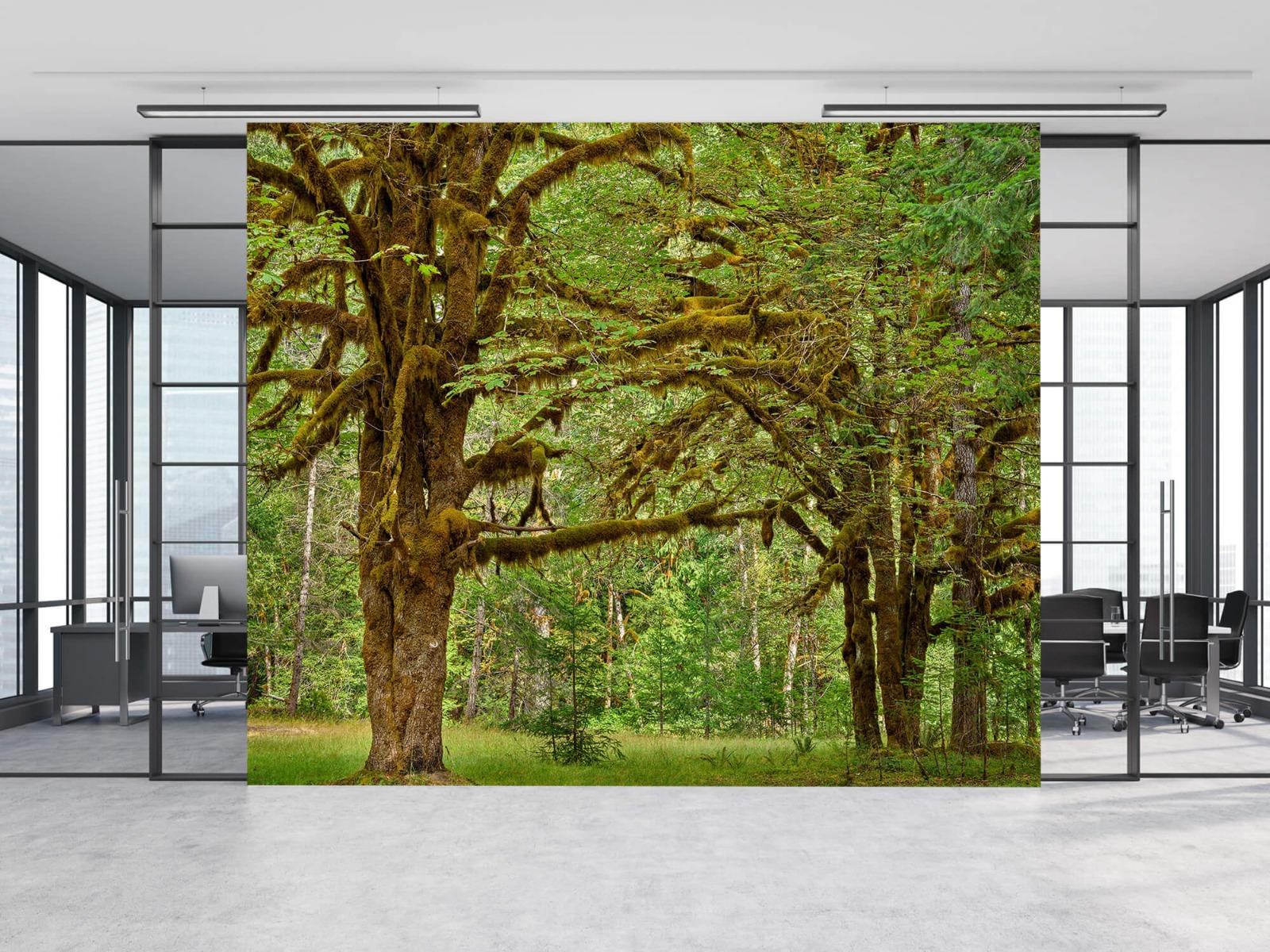 Bos behang - Twee oude bomen - Wallexclusive - Slaapkamer 11