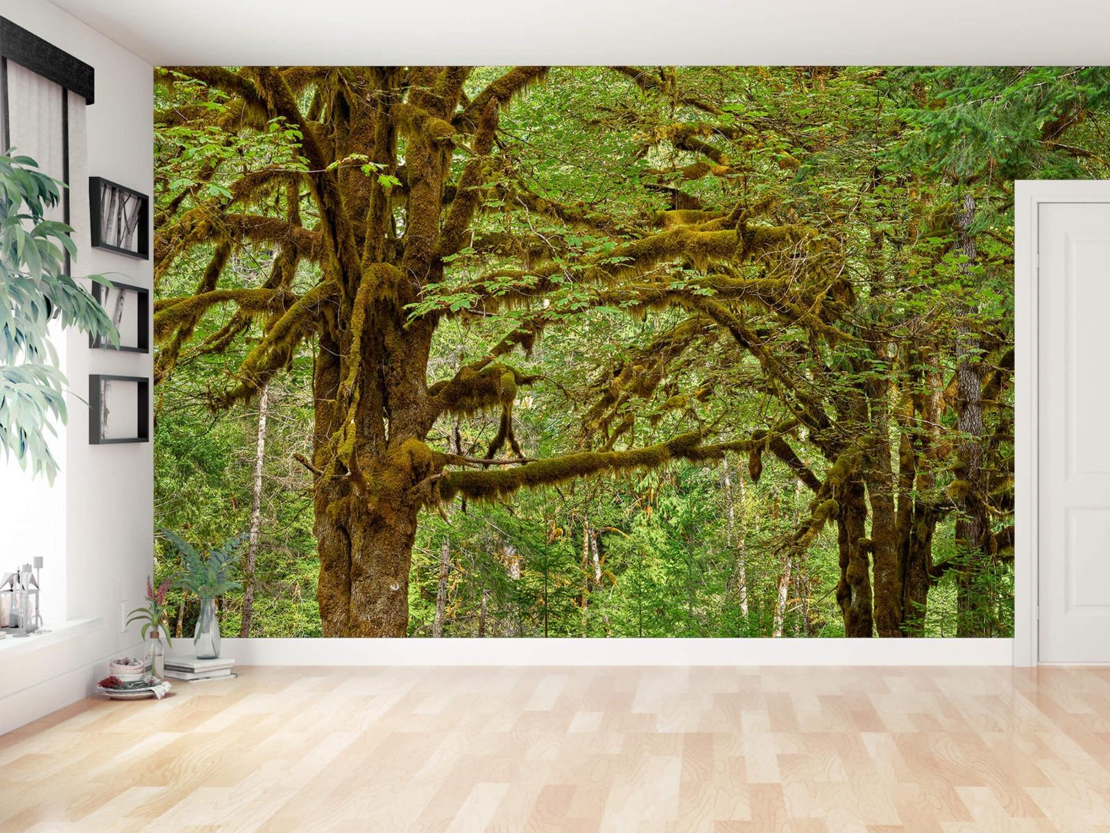 Bos behang - Twee oude bomen - Wallexclusive - Slaapkamer 2