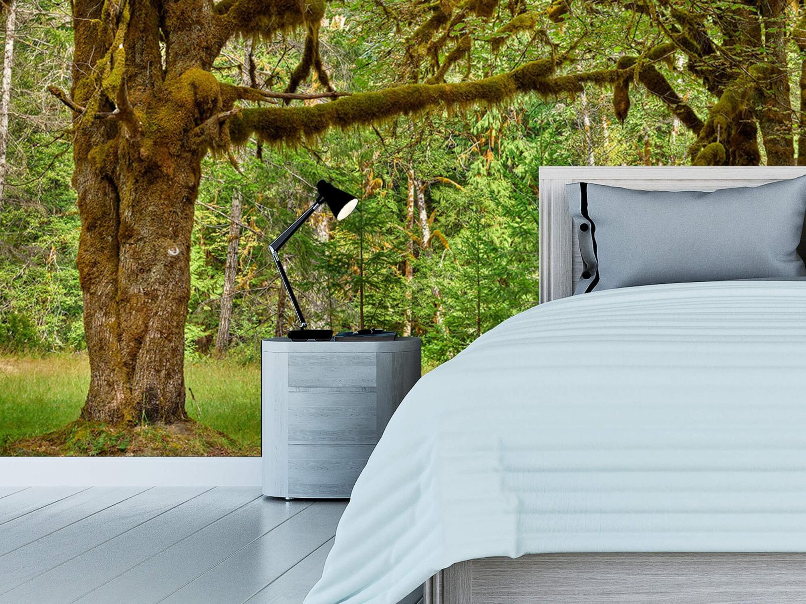 Bos behang - Twee oude bomen - Wallexclusive - Slaapkamer 14