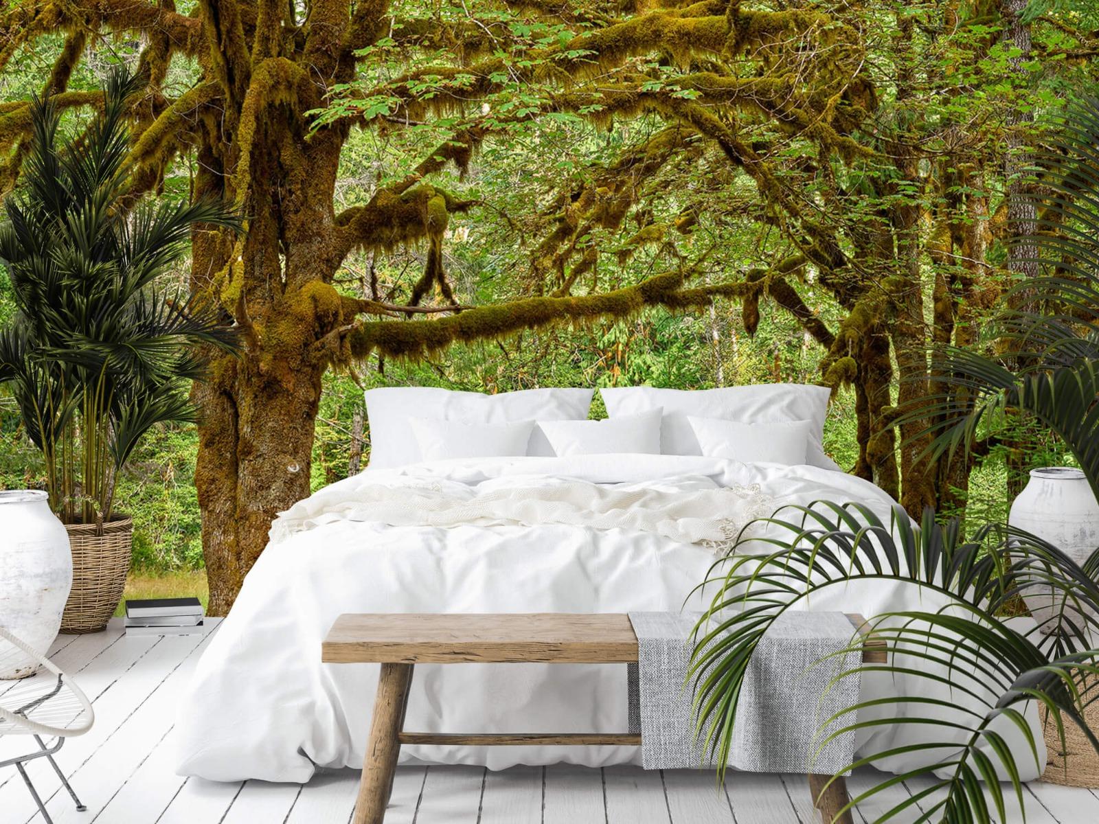 Bos behang - Twee oude bomen - Wallexclusive - Slaapkamer 3