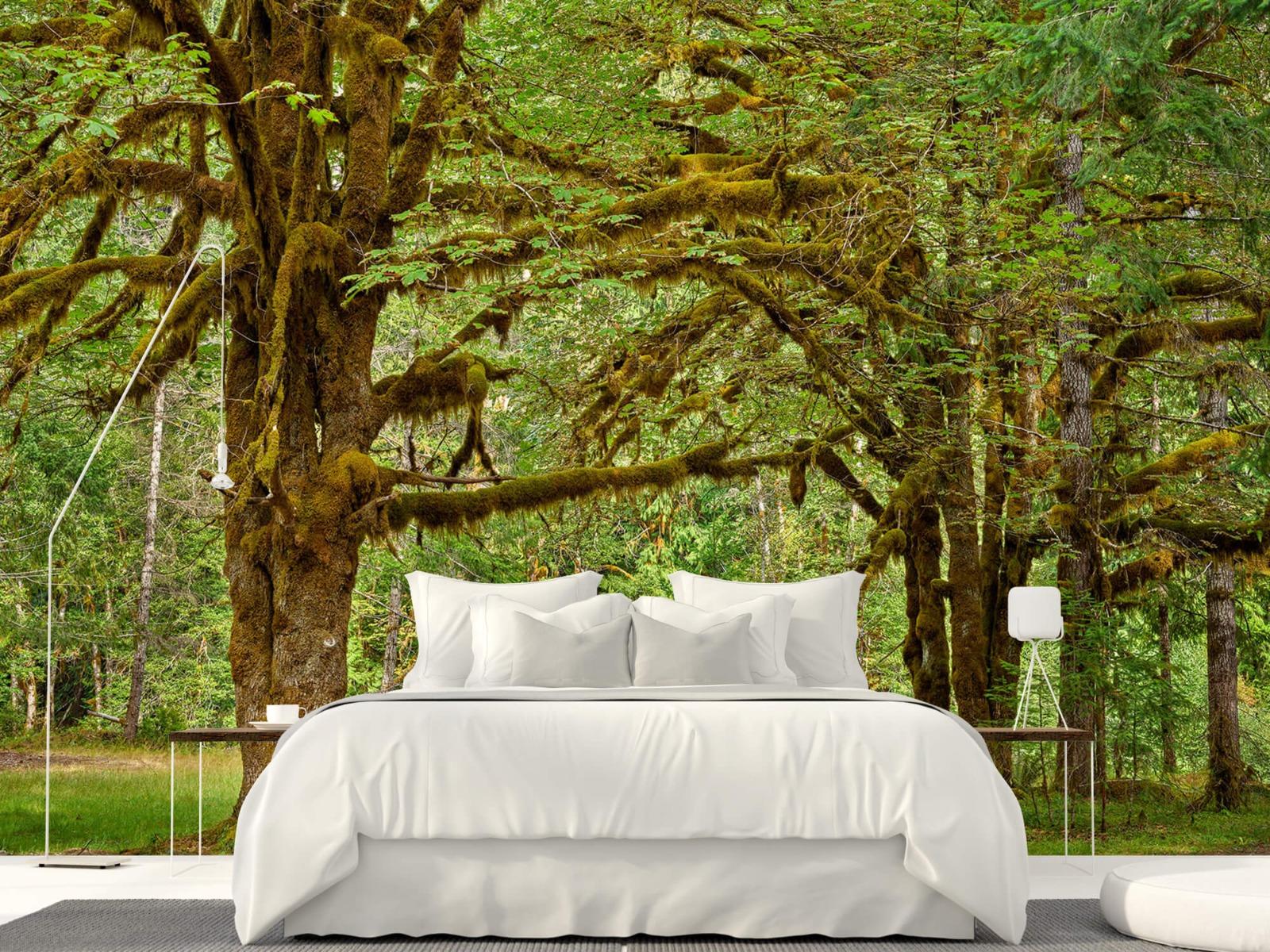 Bos behang - Twee oude bomen - Wallexclusive - Slaapkamer 17