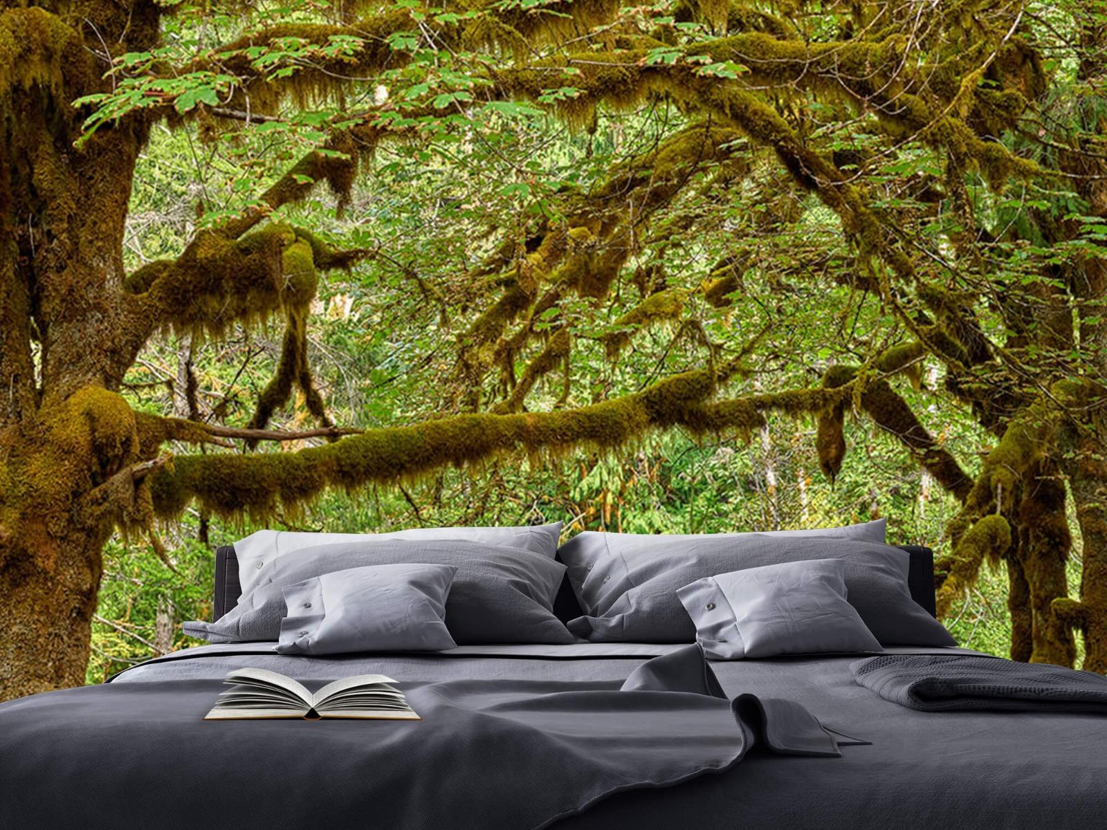 Bos behang - Twee oude bomen - Wallexclusive - Slaapkamer 18