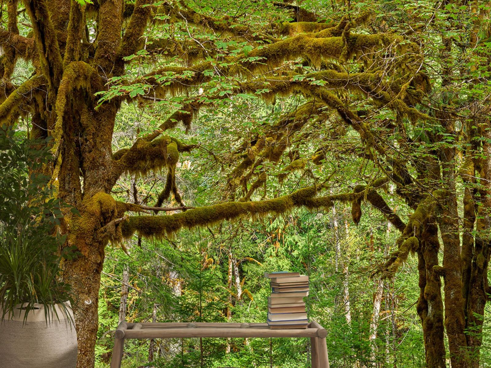 Bos behang - Twee oude bomen - Wallexclusive - Slaapkamer 1
