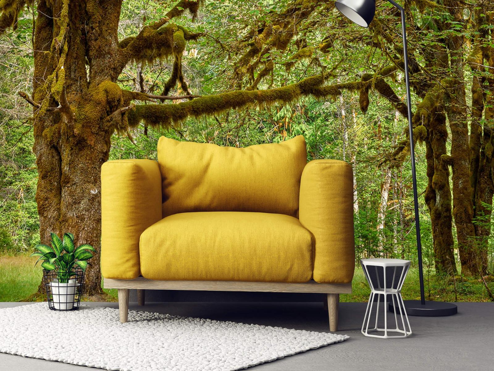 Bos behang - Twee oude bomen - Wallexclusive - Slaapkamer 21