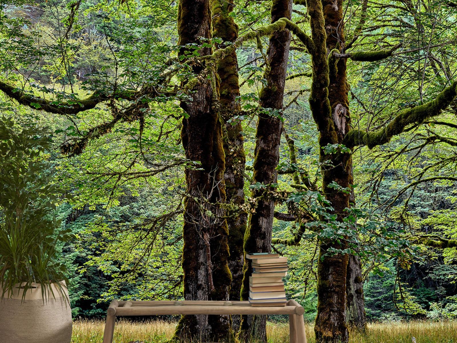 Bomen - Bomen met mos - Wallexclusive - Slaapkamer 20