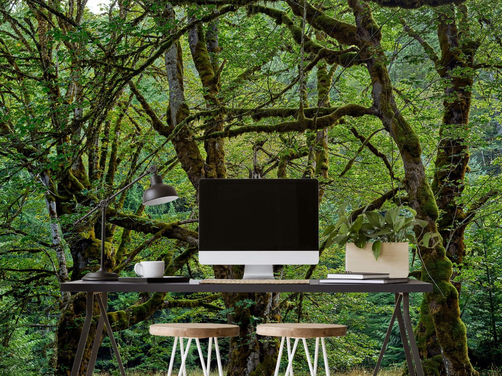 Bomen - Oude bomen - Wallexclusive - Slaapkamer 7