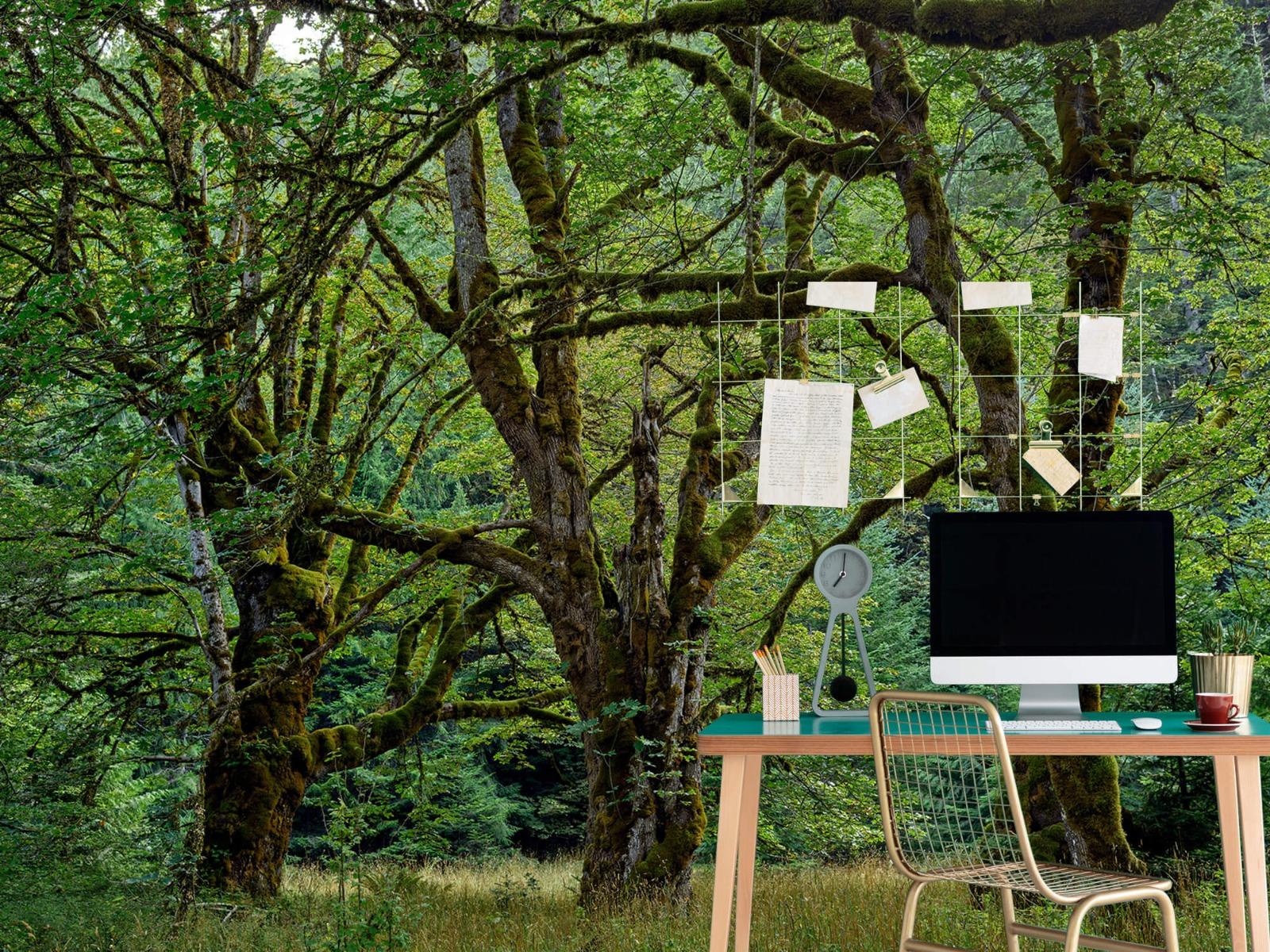 Bomen - Oude bomen - Wallexclusive - Slaapkamer 8