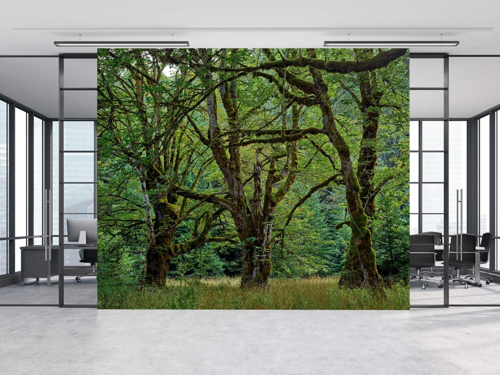 Bomen - Oude bomen - Wallexclusive - Slaapkamer 9