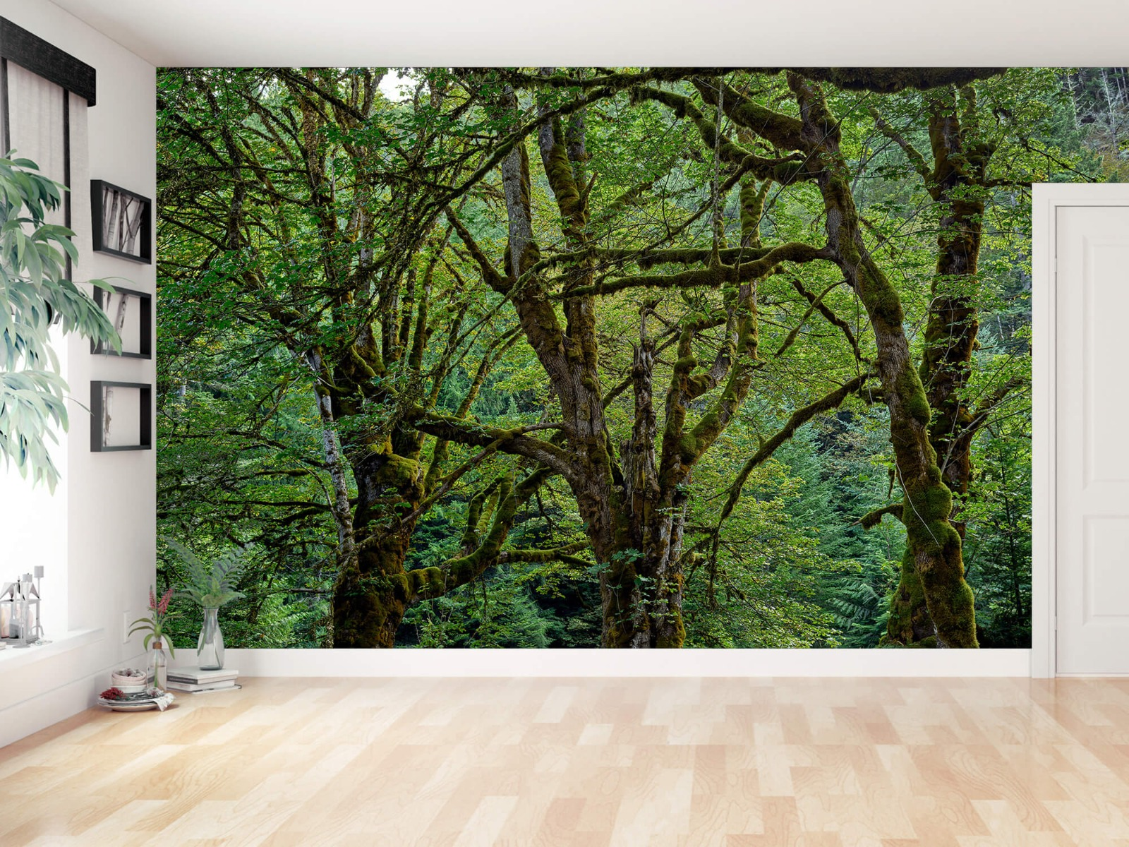 Bomen - Oude bomen - Wallexclusive - Slaapkamer 12