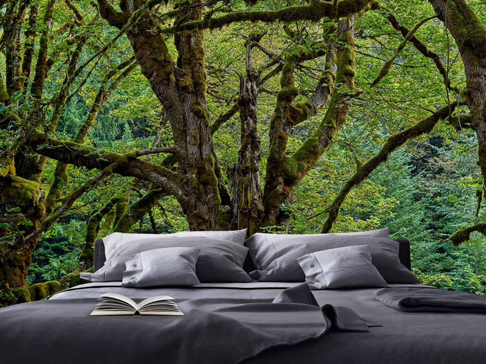 Bomen - Oude bomen - Wallexclusive - Slaapkamer 18