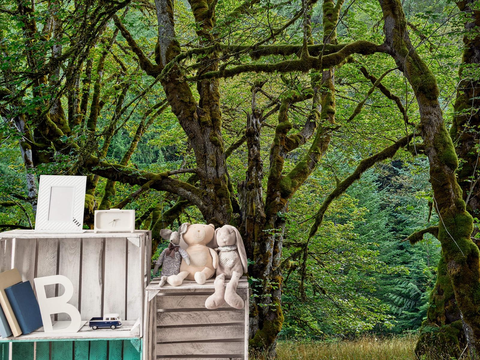 Bomen - Oude bomen - Wallexclusive - Slaapkamer 20