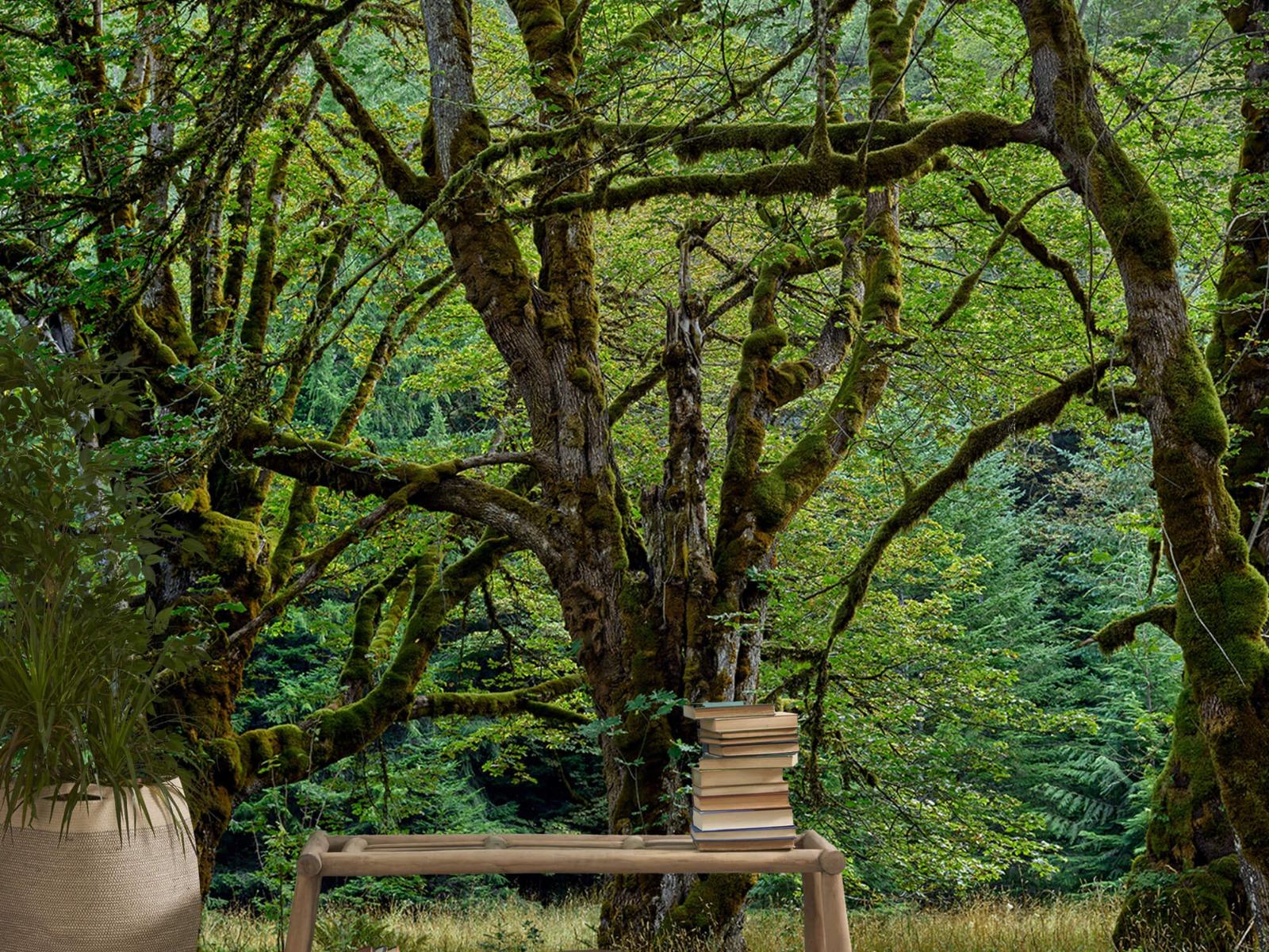Bomen - Oude bomen - Wallexclusive - Slaapkamer 21