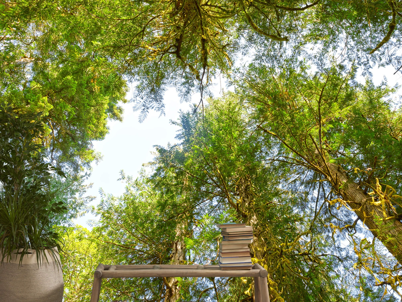 Bomen - Bomen en bladeren - Wallexclusive - Slaapkamer 21