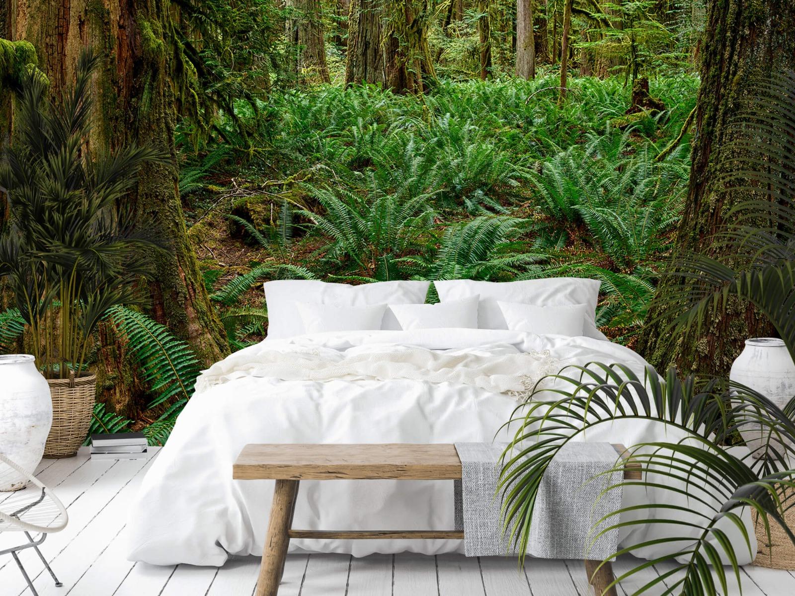 Bos behang - Varens en bomen - Wallexclusive - Slaapkamer 13