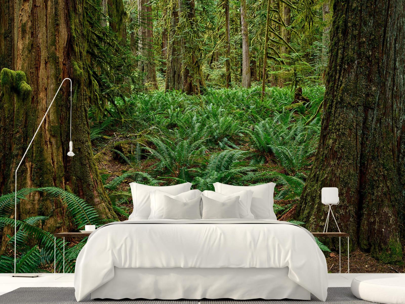 Bos behang - Varens en bomen - Wallexclusive - Slaapkamer 16