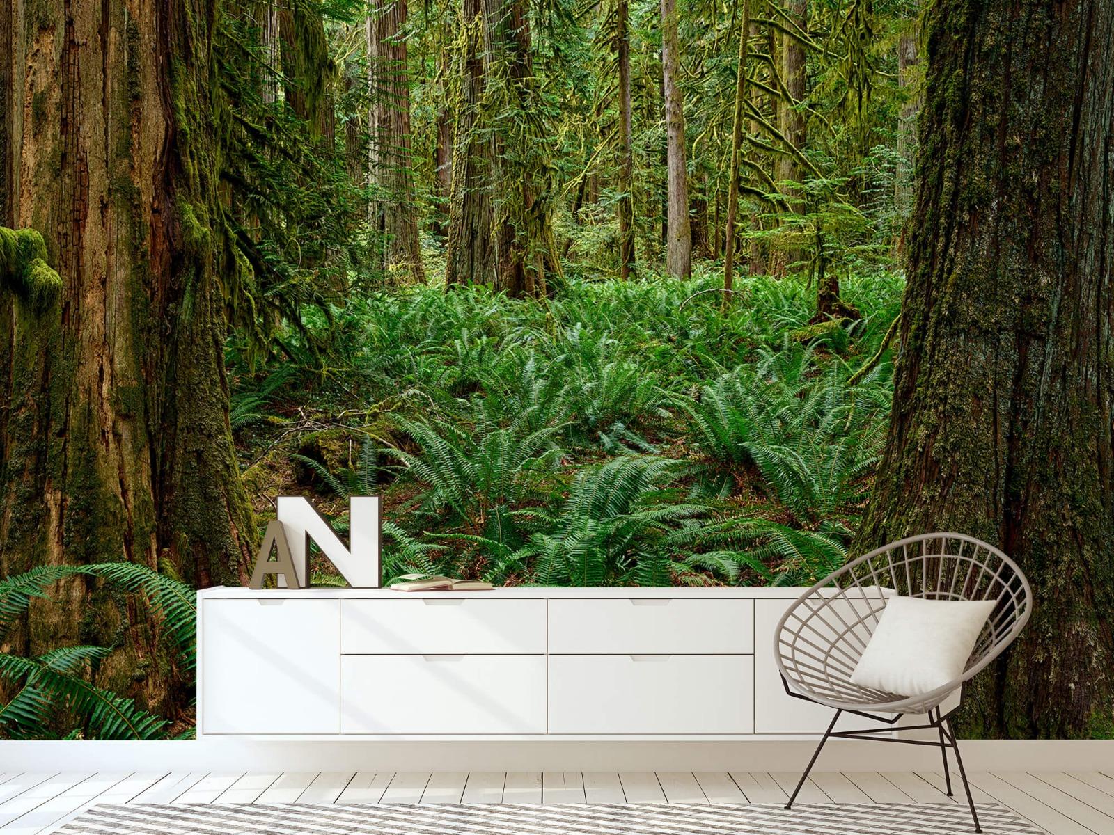 Bos behang - Varens en bomen - Wallexclusive - Slaapkamer 23