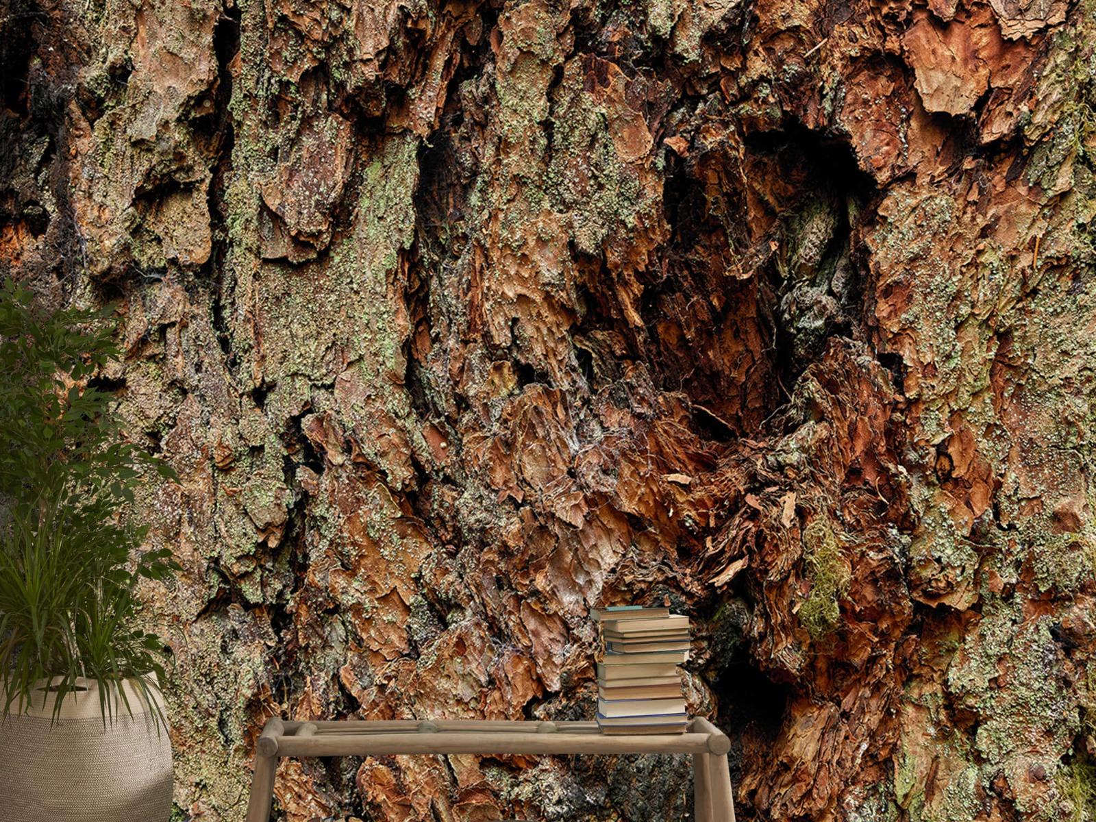 Hout behang - Boomschors oude boom - Wallexclusive - Slaapkamer 20