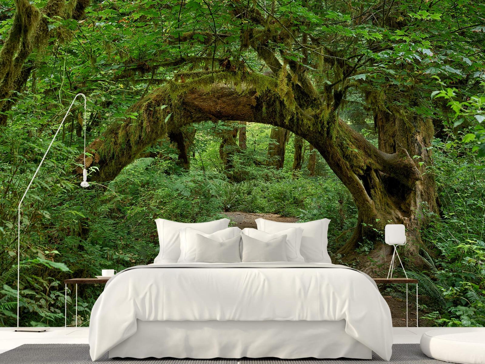 Bos behang - Boom in een boog - Slaapkamer 4