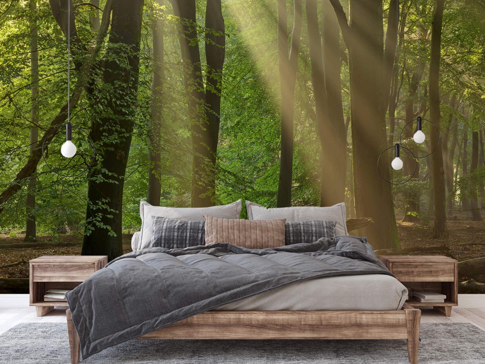 Bomen - Zonneharpen in het bos - Slaapkamer 6