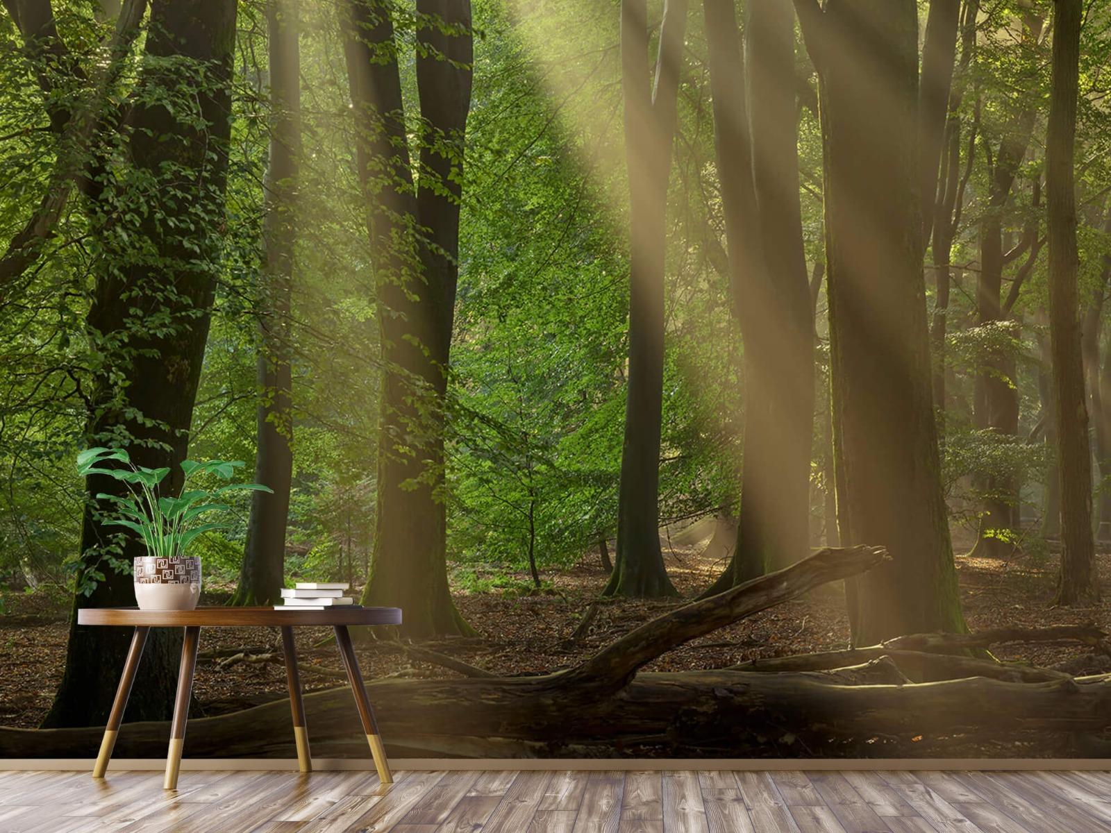 Bomen - Zonneharpen in het bos - Slaapkamer 1