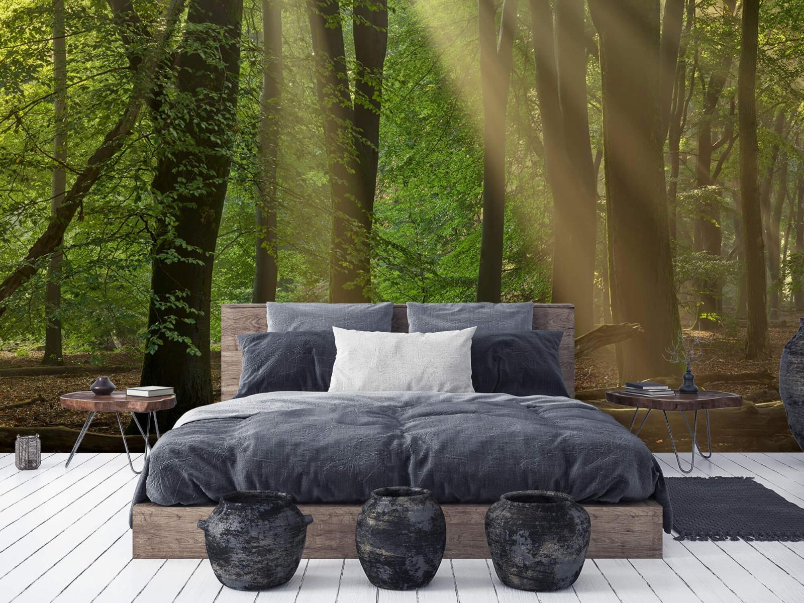 Bomen - Zonneharpen in het bos - Slaapkamer 5