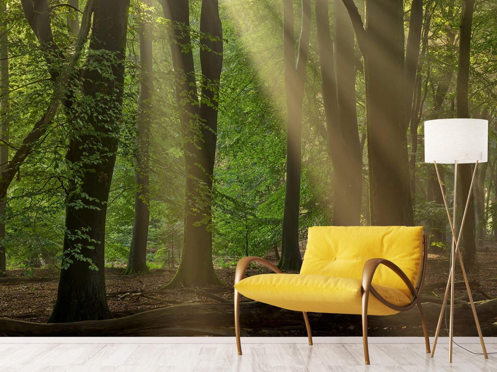Bomen - Zonneharpen in het bos - Slaapkamer 12