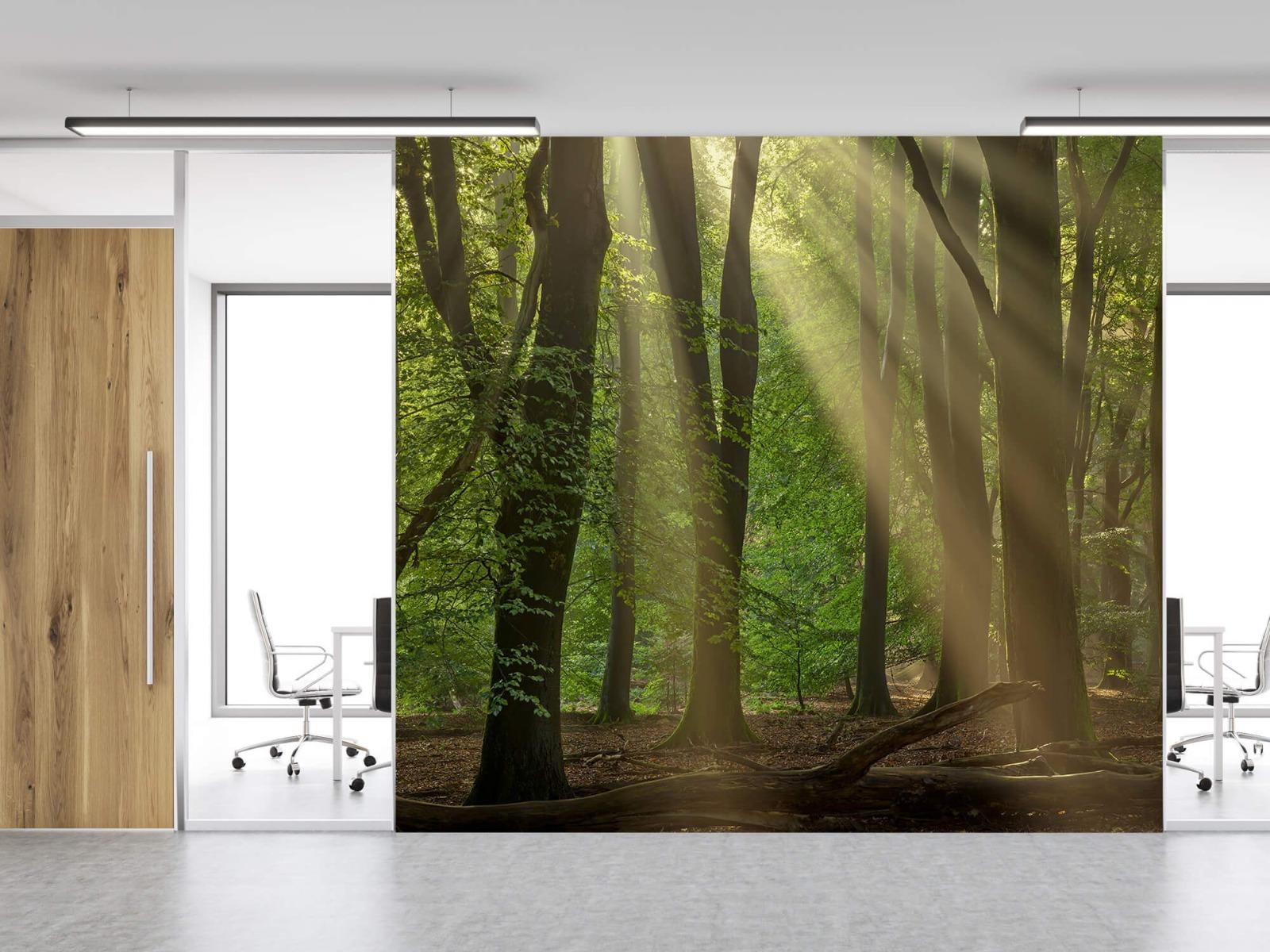 Bomen - Zonneharpen in het bos - Slaapkamer 13
