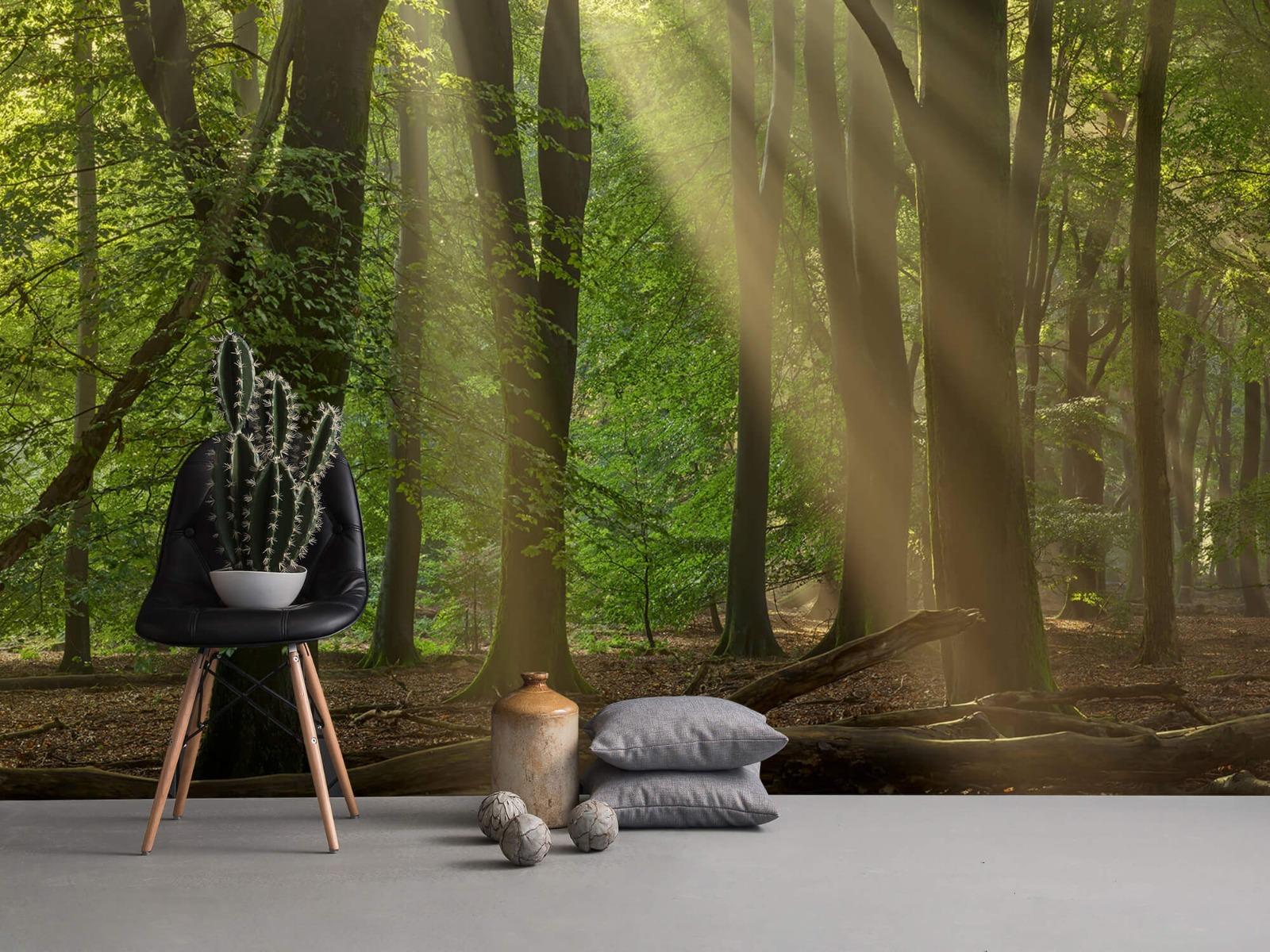 Bomen - Zonneharpen in het bos - Slaapkamer 14