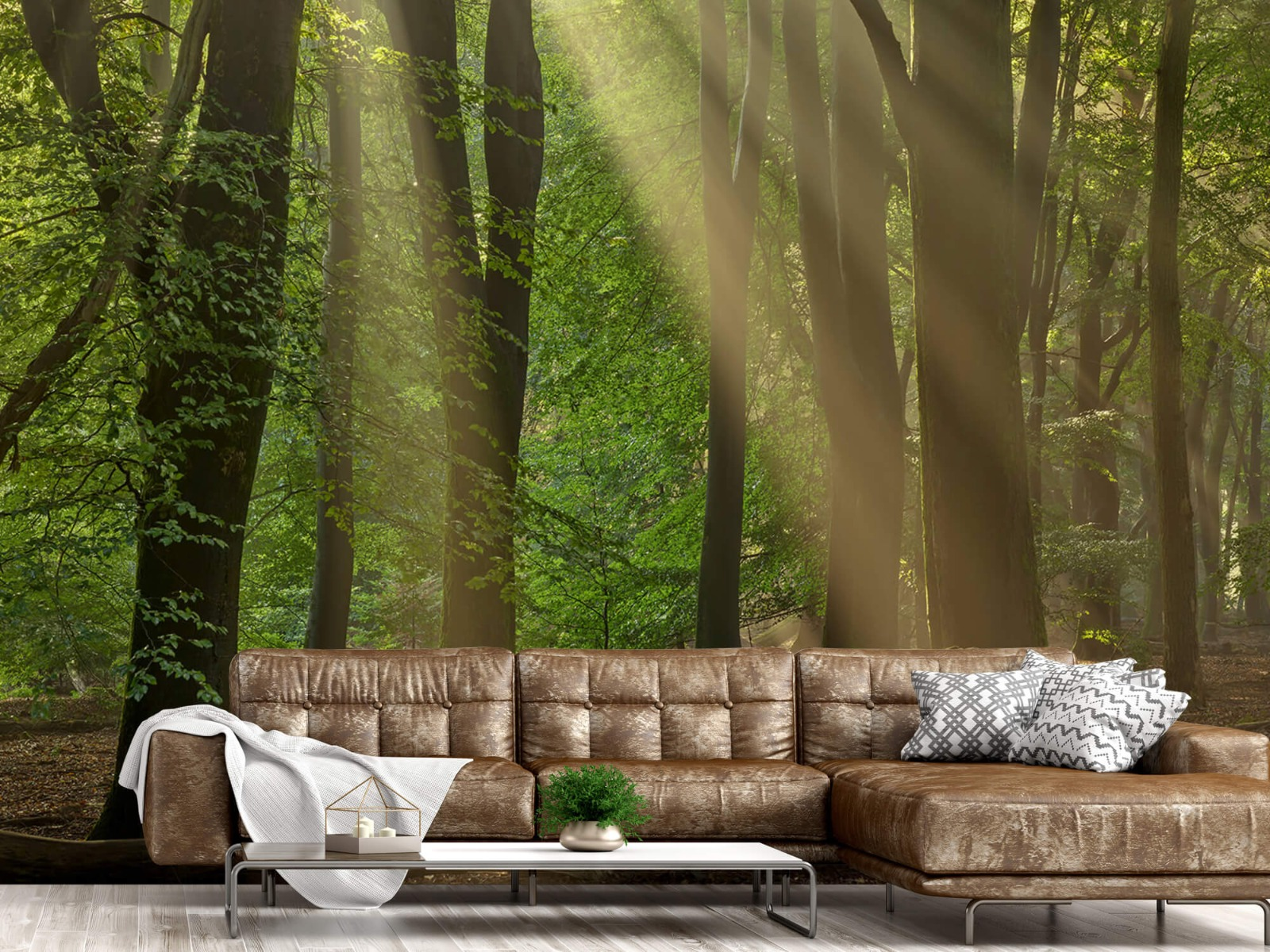 Bomen - Zonneharpen in het bos - Slaapkamer 15