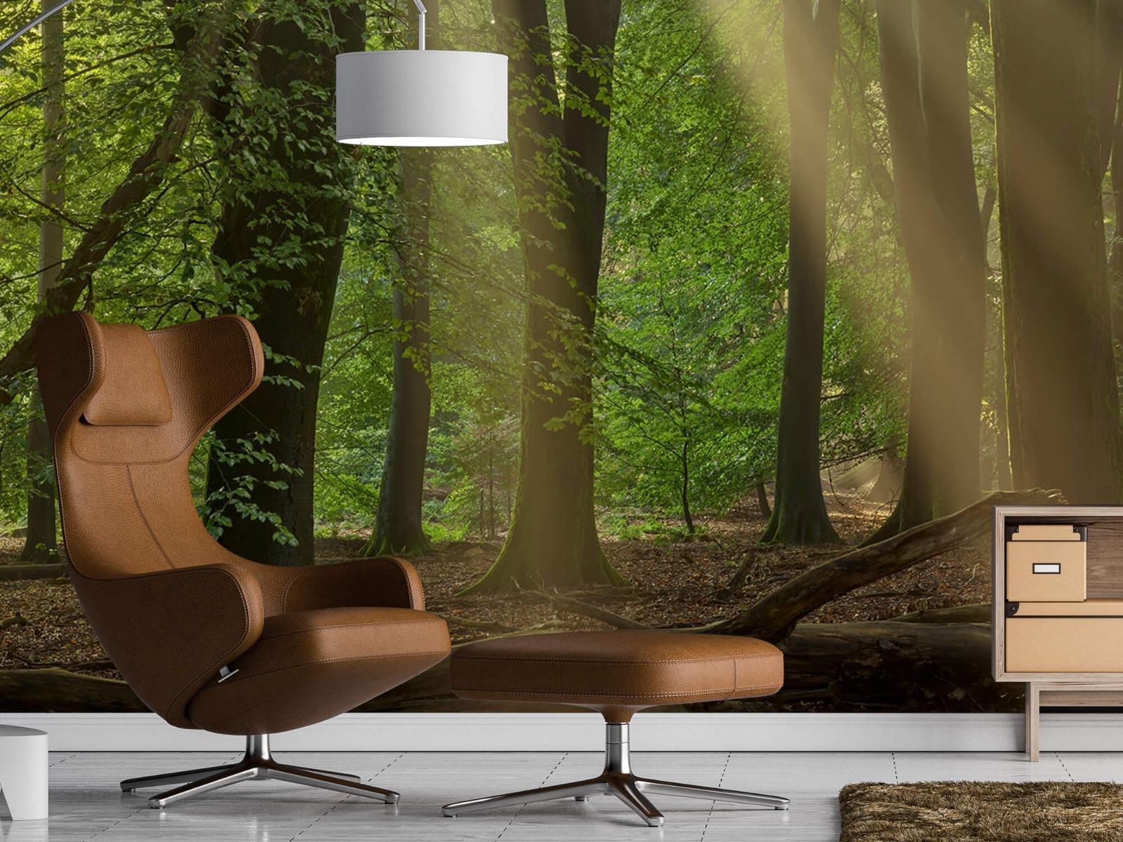 Bomen - Zonneharpen in het bos - Slaapkamer 2