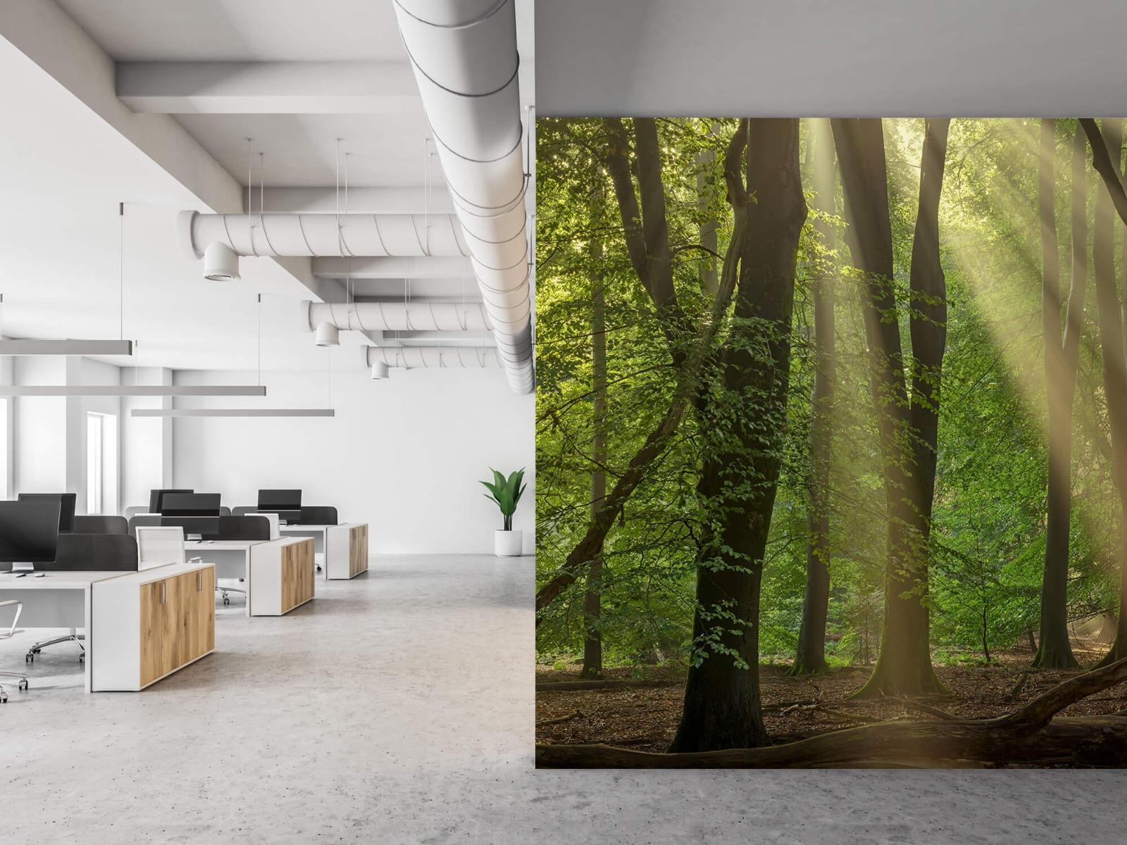 Bomen - Zonneharpen in het bos - Slaapkamer 21