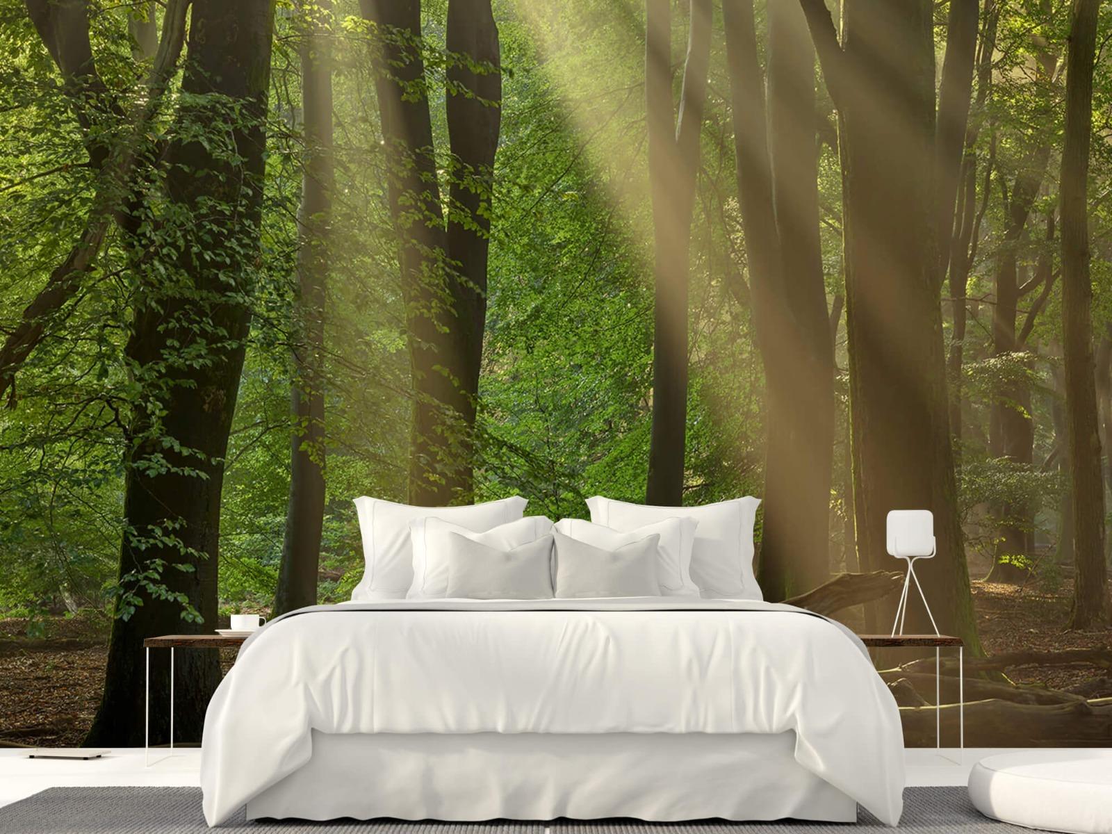 Bomen - Zonneharpen in het bos - Slaapkamer 22