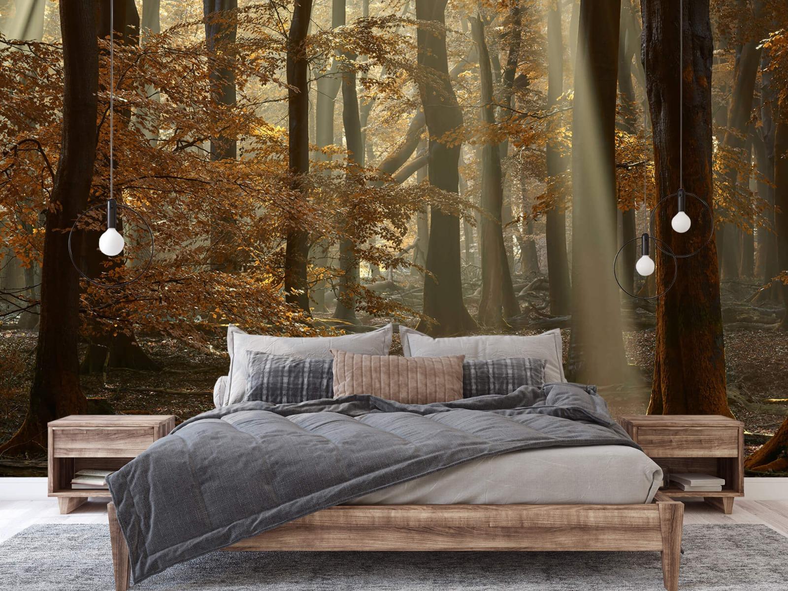Bos behang - Herfstkleuren in het bos - Slaapkamer 5