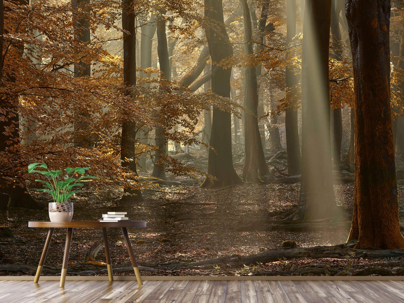 Bos behang - Herfstkleuren in het bos - Slaapkamer 7