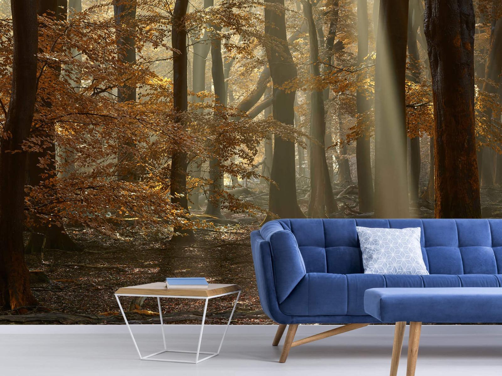 Bos behang - Herfstkleuren in het bos - Slaapkamer 8