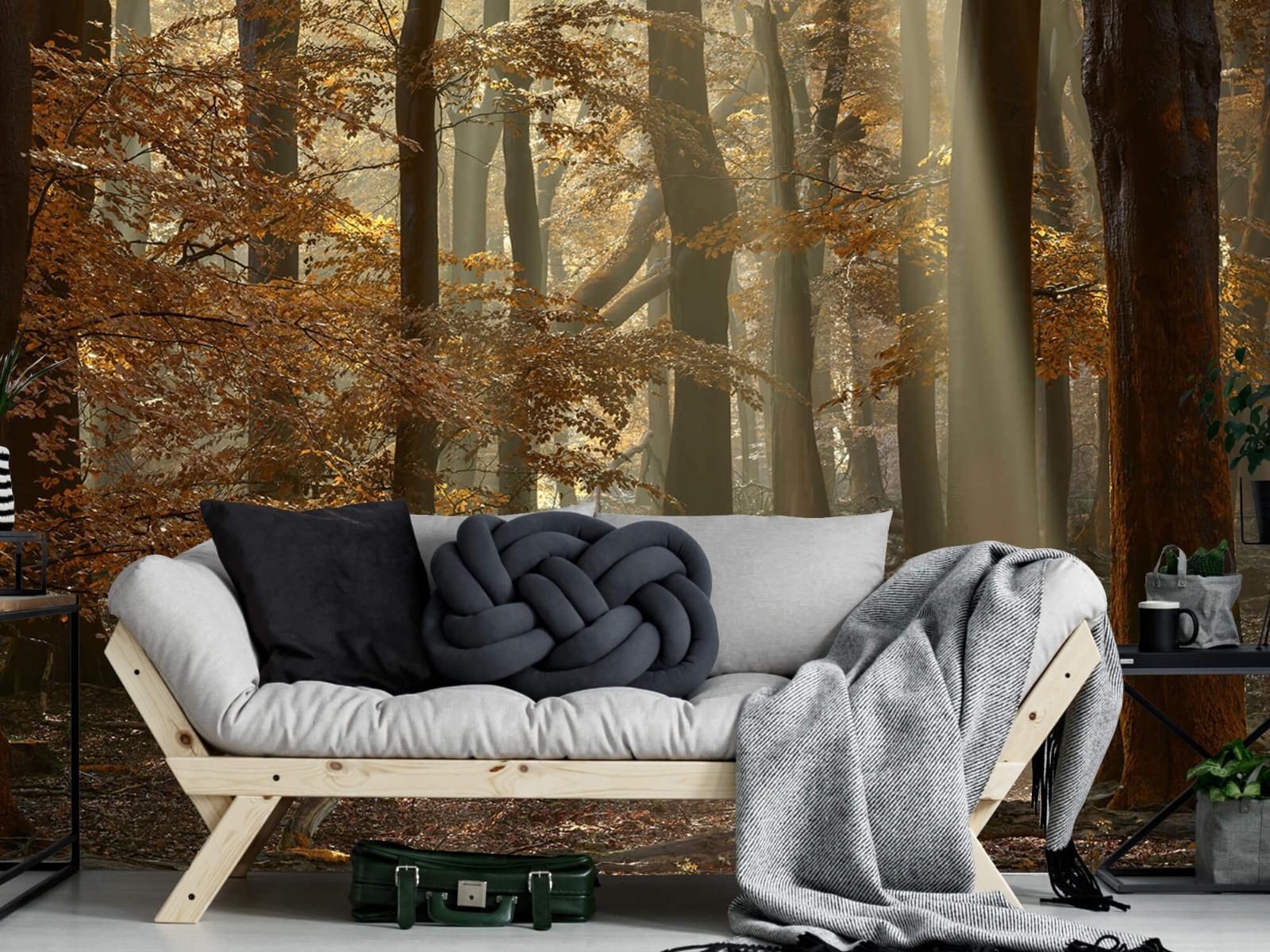 Bos behang - Herfstkleuren in het bos - Slaapkamer 9