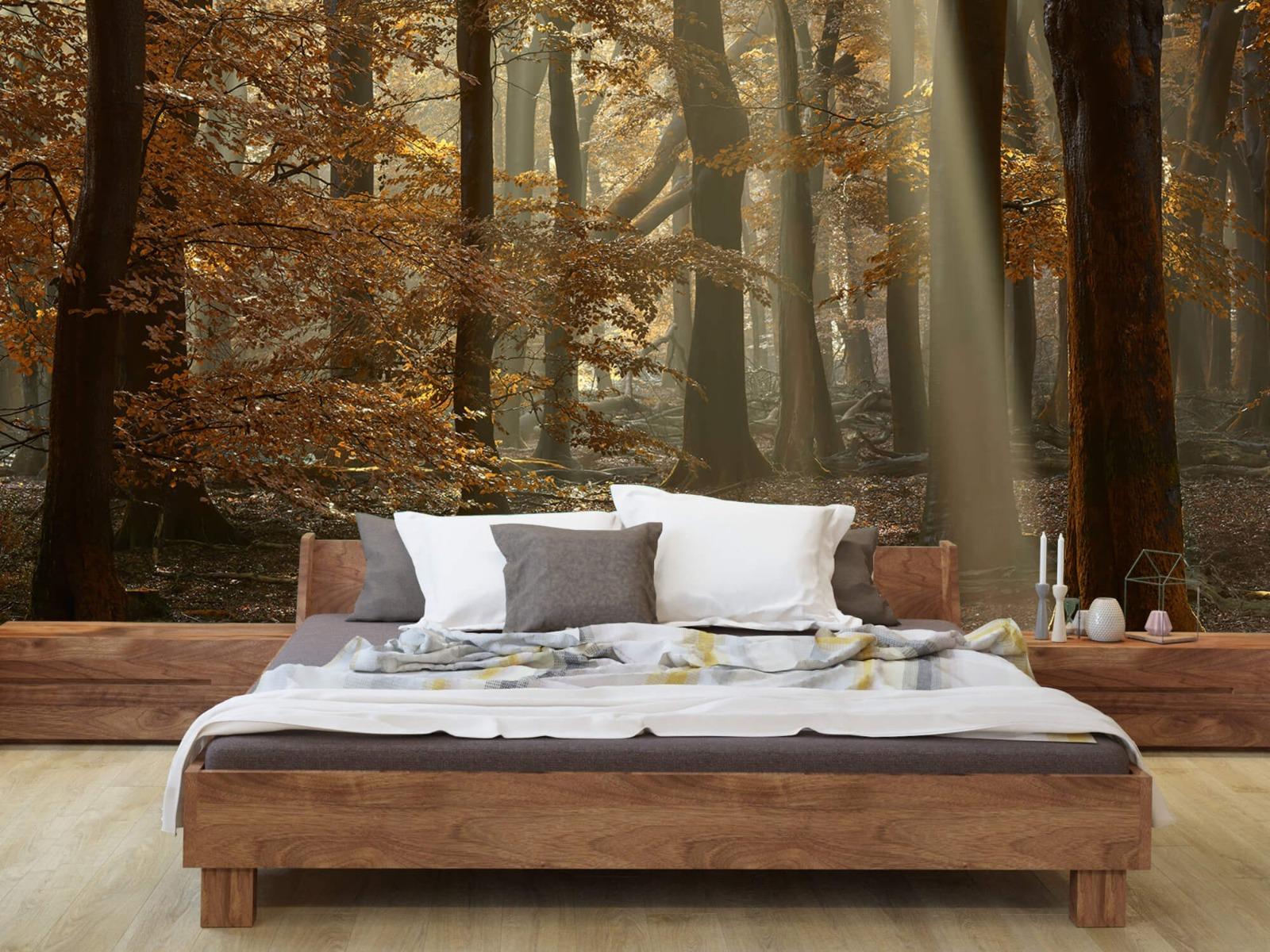 Bos behang - Herfstkleuren in het bos - Slaapkamer 10